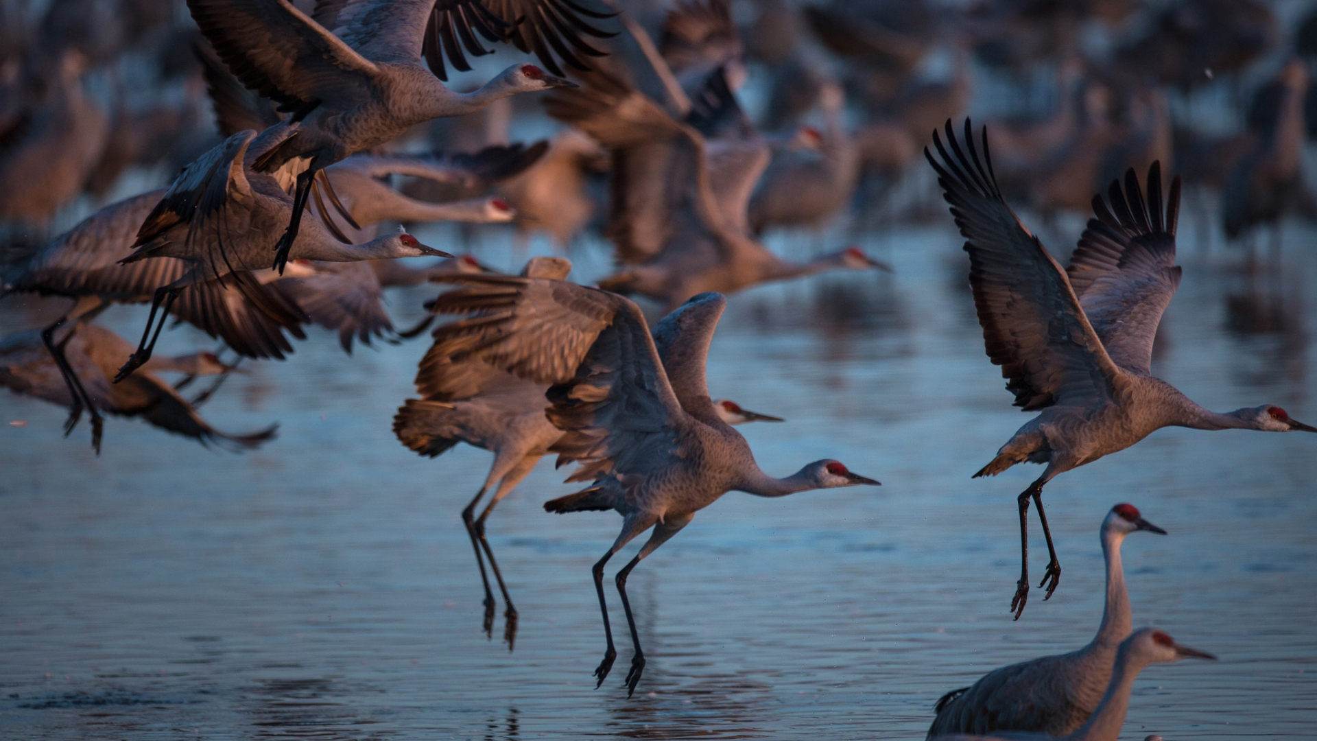 A Night With The Sandhill Cranes At The Crane Trust In >> March Magic Nebraska S Sandhill Crane Migration Gives New Meaning