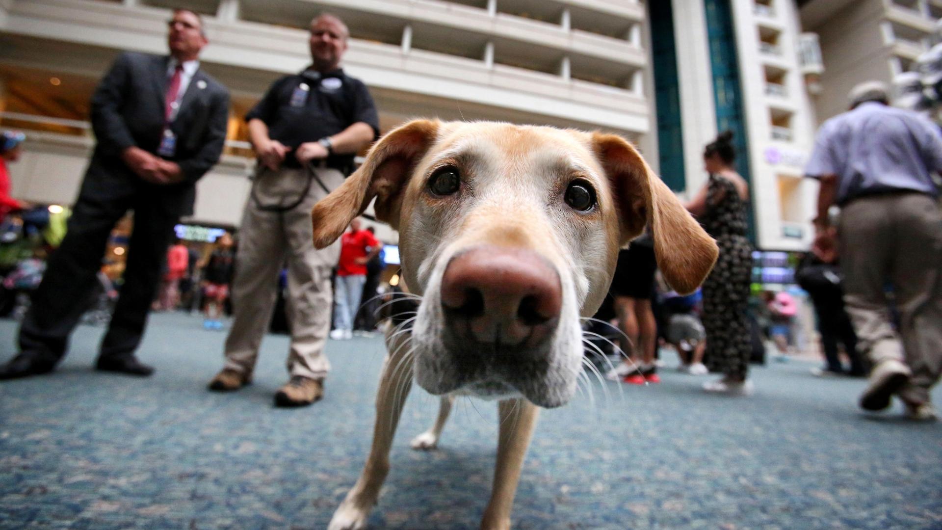 Orlando International Airport tops for bomb dogs - Orlando