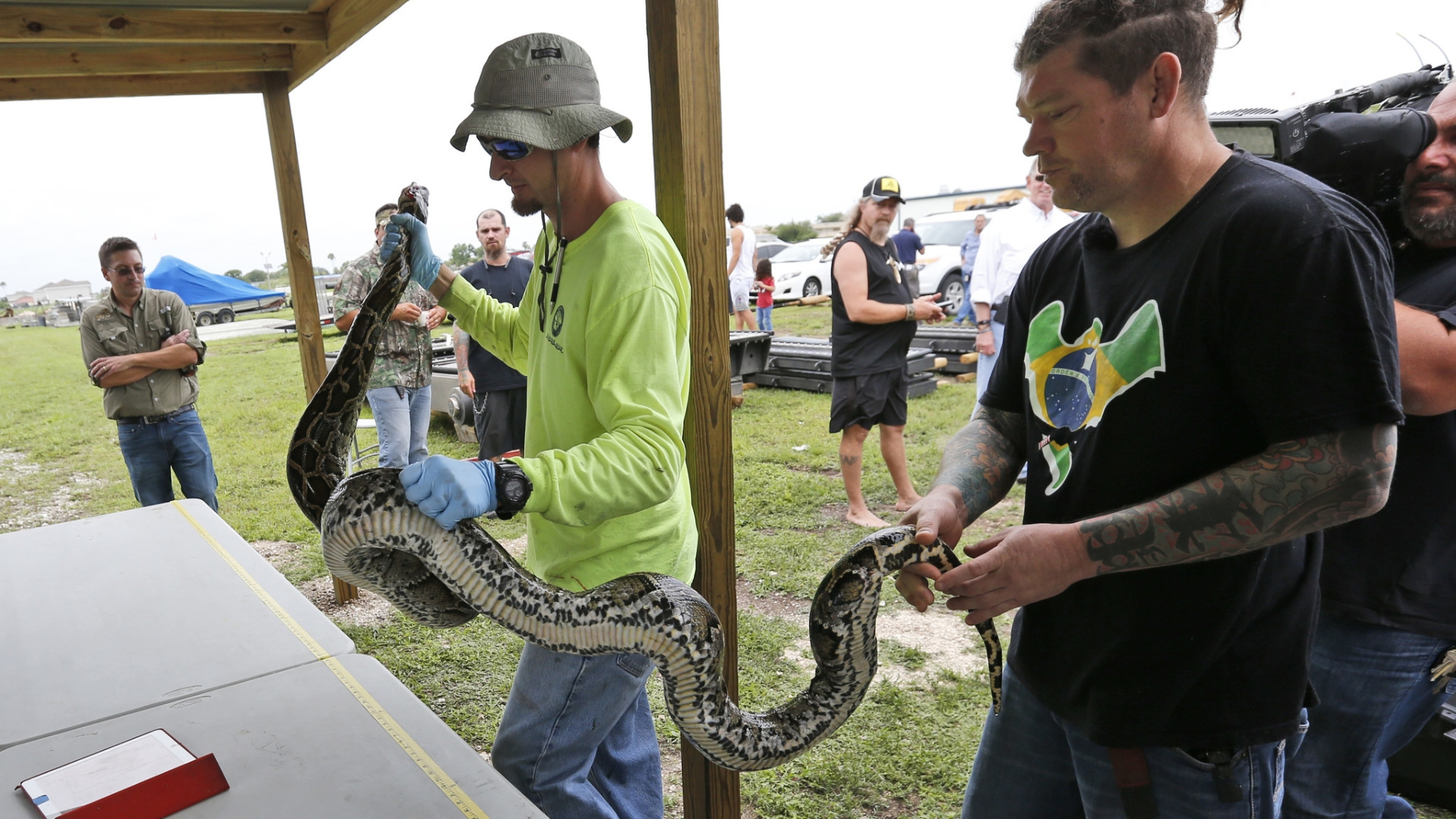 Hunters with shotguns to go after pythons in Everglades