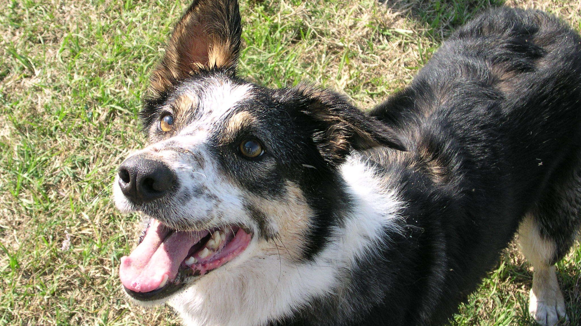 Dog lovers emerge to support owners who border collie was