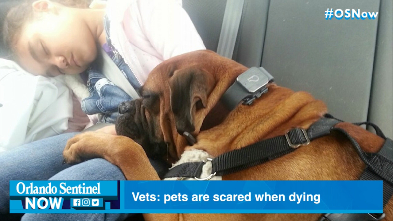 Dying pets' unconditional love demands you be there for them in