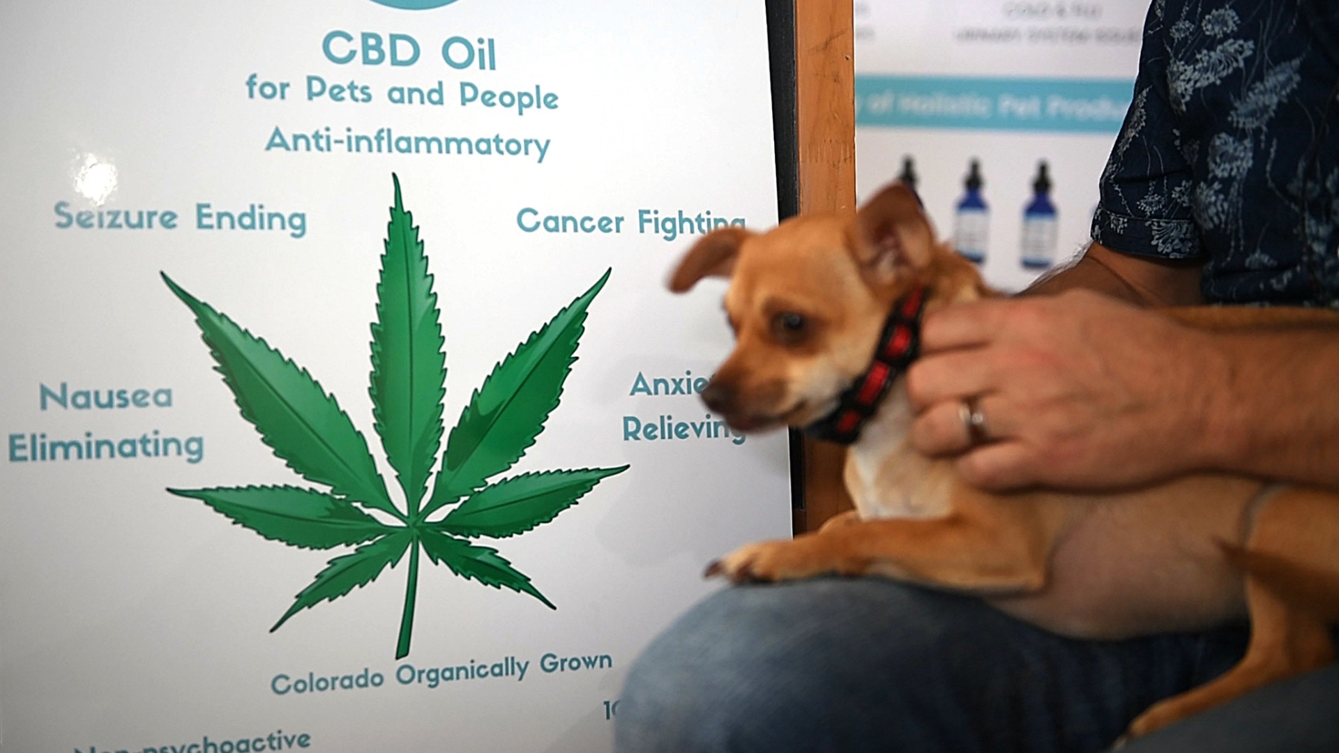Cbd oil dogs chewy  🏆 CBD Oil for Pets: What You Should